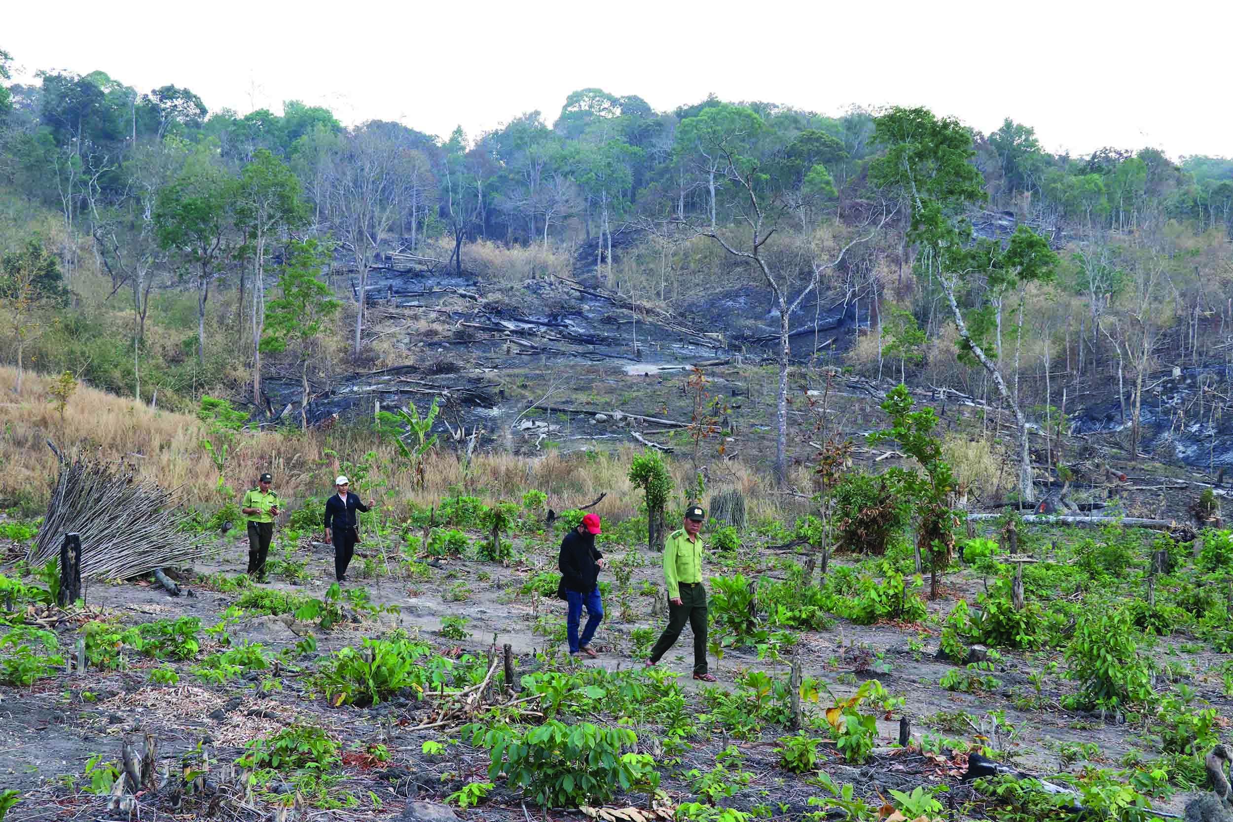 Lực lượng kiểm lâm tuần tra khu vực rừng ở Mang Yang.