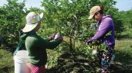 Phát triển nông nghiệp công nghệ cao