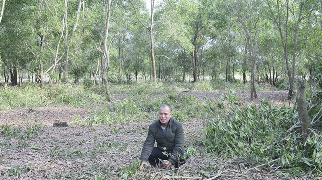 Một khoảnh rừng phòng hộ ở thôn Linh An bị chặt phá.