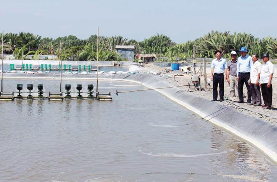 Mô hình nuôi tôm công nghiệp ở huyện Cần Đước còn khó nhân rộng do chi phí đầu tư lớn.