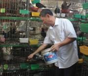 Mô hình nuôi chim bồ câu Pháp thương phẩm của ông Nguyễn Đình Phúc cho thu nhập trên 200 triệu đồng/năm.