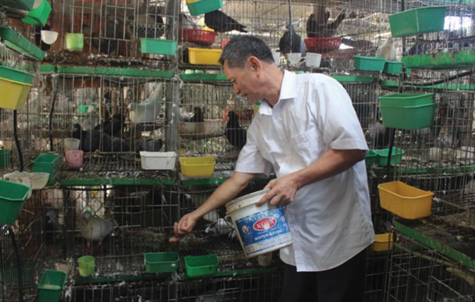Mô hình nuôi chim bồ câu thương phẩm của ông Nguyễn Đình Phúc cho thu nhập trên 200 triệu đồng/năm.