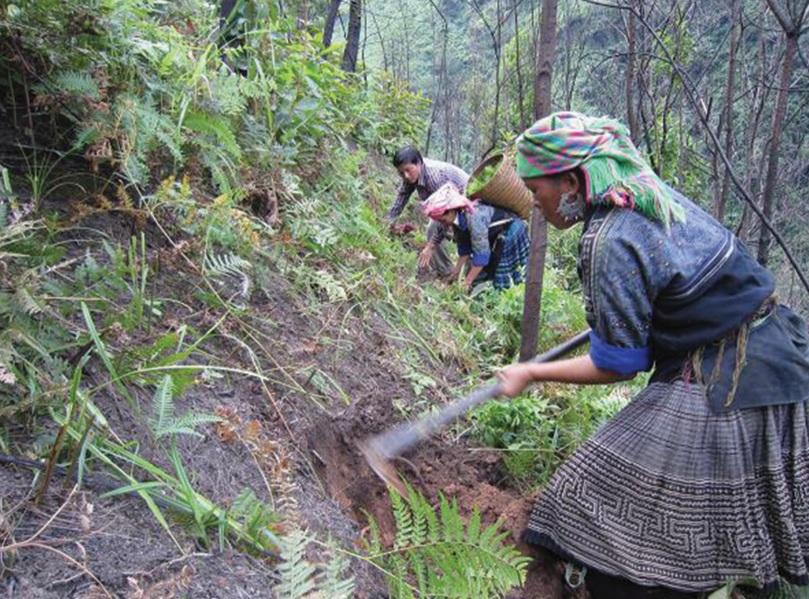 Người dân Yên Bái dọn dẹp thực bì, phòng chống nguy cơ xảy ra cháy rừng.