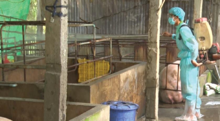 Các địa phương tăng cường phun xịt hoá chất khử trùng phòng dịch tả lợn tại các trại nuôi lợn tập trung.