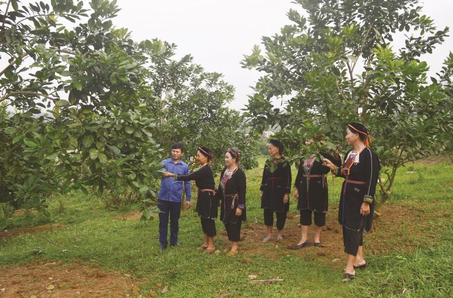 Trưởng thôn Trần Văn Thanh thôn Hòn Lau, xã Thắng Quân, huyện Yên Sơn (Tuyên Quang) hướng dẫn bà con kinh nghiệm trồng và chăm sóc bưởi.
