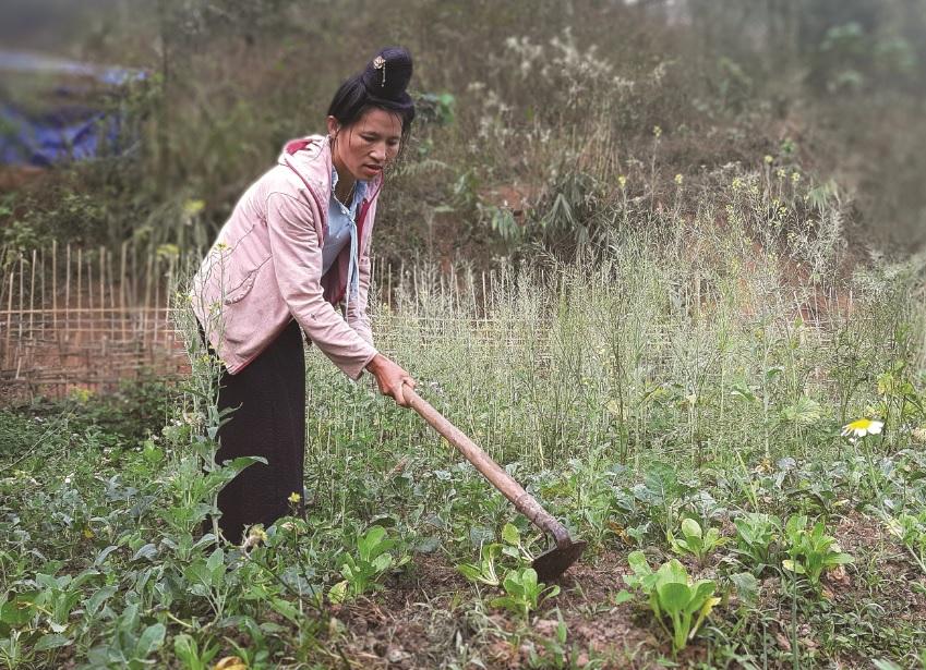 Chị Quàng Thị Hiên đã học nghề làm nấm nhưng không phát huy được, nghèo vẫn hoàn nghèo.