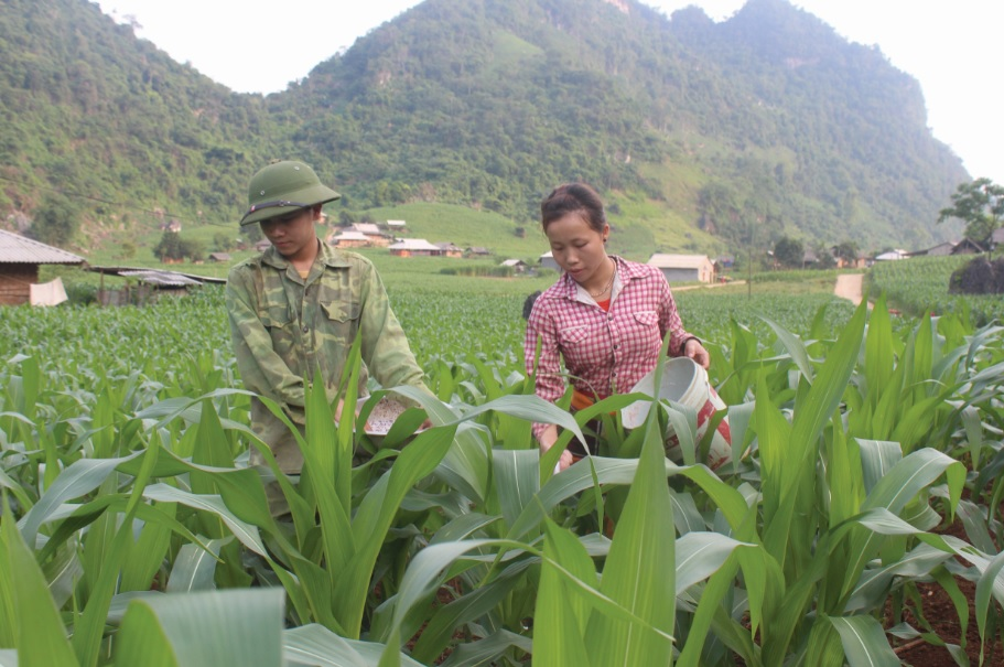 Cánh đồng ngô lai được Đề án 2037 hỗ trợ của người dân xóm Đồng Dong, xã Phương Giao, huyện Võ Nhai phát triển xanh tốt.
