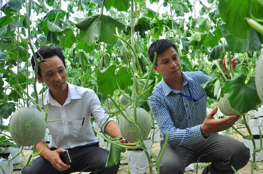 Người dân bản Phòng, xã Thạch Giám trồng dưa sạch, cho thu nhập cao.