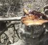 Chặt phá rừng phòng hộ