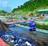 Nuôi cá lồng theo quy trình VietGAP mang lại hiệu quả kinh tế cao cho các hộ nuôi lồng ở Tuyên Quang.