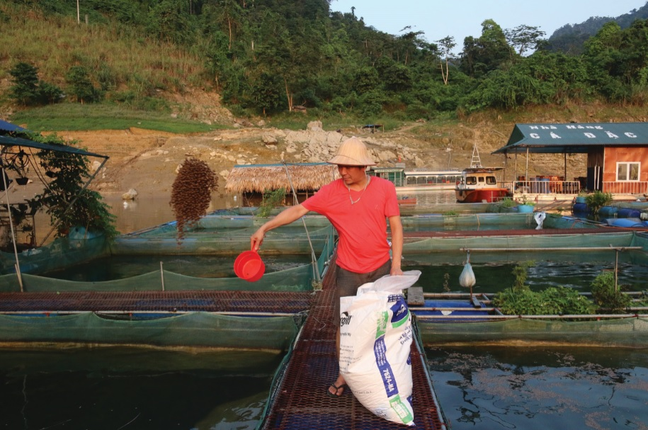 Anh Trương Tuấn Minh chăm sóc cá lăng đen.