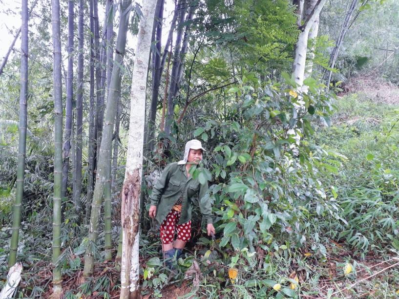 Người dân bảo vệ rừng ở Thanh Hóa đang mòn mỏi chờ đợi tiền chi trả bảo vệ và phát triển rừng.