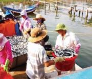 Ngư dân điêu đứng vì giá cá nục giảm mạnh.