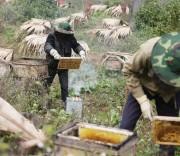 Người dân áp dụng khoa học-kỹ thuật vào nuôi ong bạc hà.