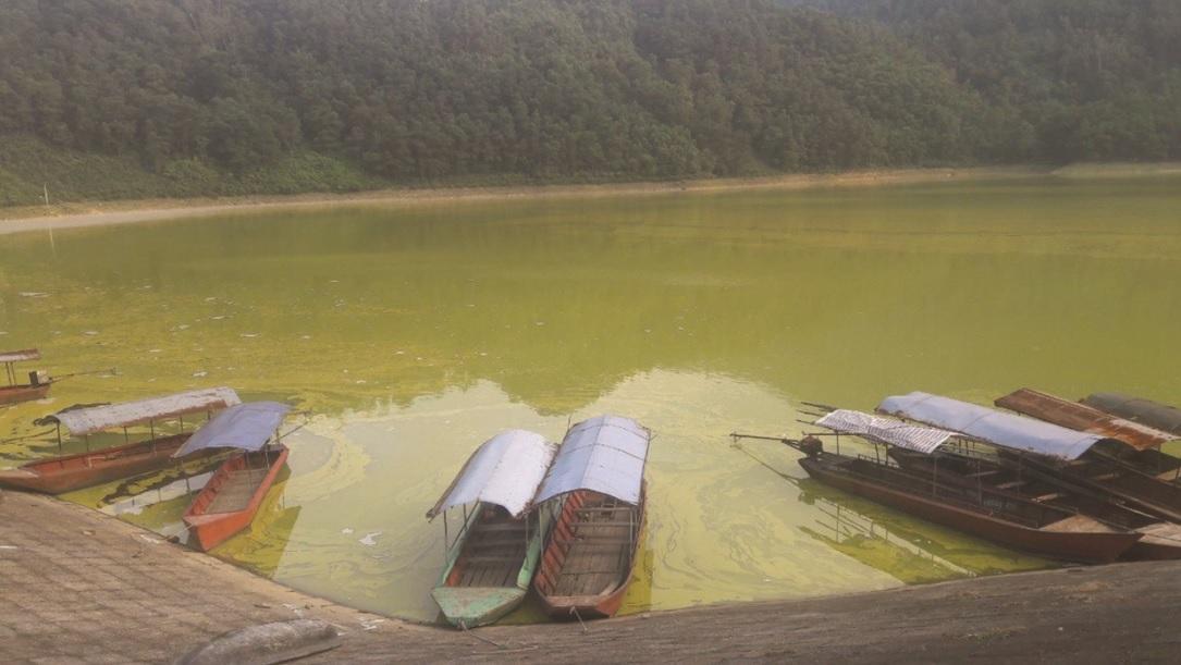 Hồ Gò Miếu là một trong ba hồ lớn nhất tỉnh Thái Nguyên đang bị ô nhiễm.