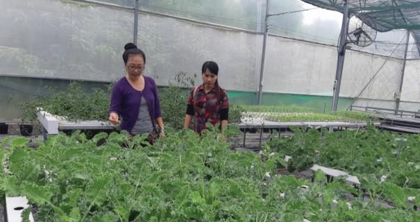 Chị Hòa (bên trái) kiểm tra hệ thống trồng rau sạch thủy canh khép kín.