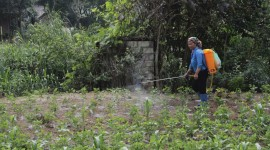 Hiện chưa có thuốc trừ sâu keo được cấp phép ở Việt Nam.