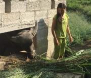 Các hộ dân xã Ngọc Động đã di dời gia súc khỏi gầm sàn nhà ở, đảm bảo vệ sinh môi trường. Các hộ dân xã Ngọc Động đã di dời gia súc khỏi gầm sàn nhà ở, đảm bảo vệ sinh môi trường.