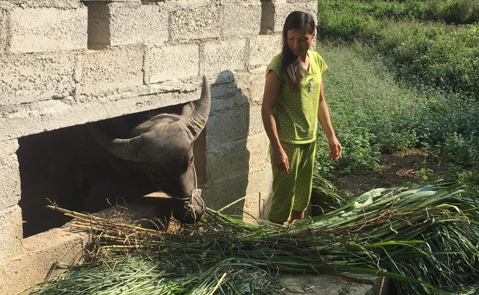 Các hộ dân xã Ngọc Động đã di dời gia súc khỏi gầm sàn nhà ở, đảm bảo vệ sinh môi trường.