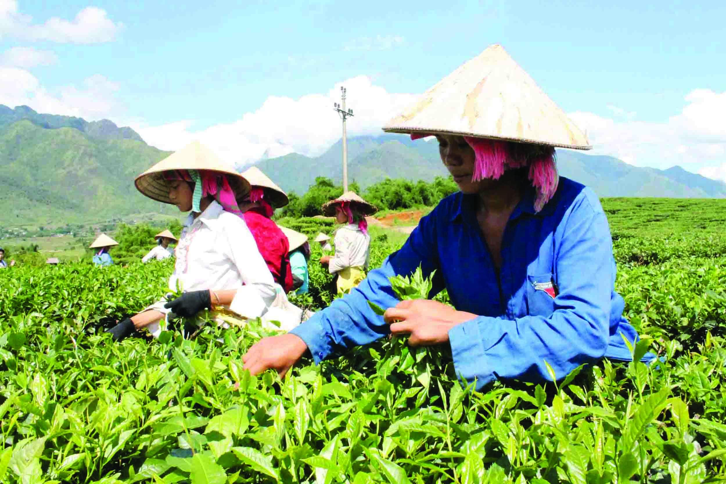 Nhờ chuyển dịch cơ cấu cây trồng vật nuôi, đời sống của đồng bào các dân tộc huyện Tân Uyên không ngừng được cải thiện.