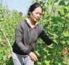 Phụ nữ Ea Súp trồng rau an toàn.