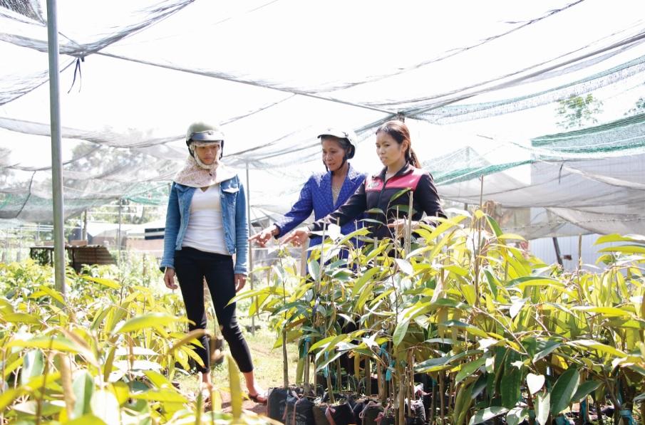 Chị Nguyễn Thị Phúc (bìa phải) một thành viên CLB hướng dẫn bà con chọn cây giống.