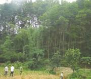 phát triển rừng