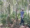 trồng rừng gỗ lớn