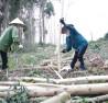 Trồng rừng kinh tế