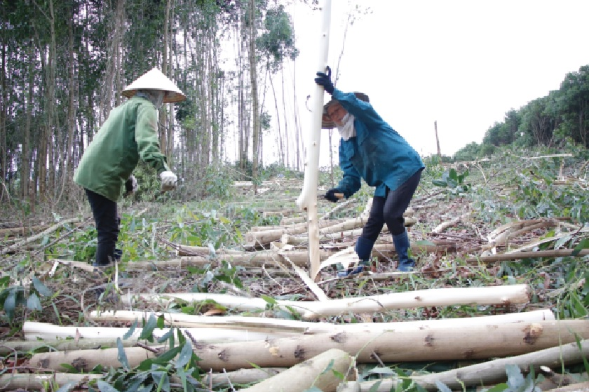 Kinh tế rừng giúp nhiều hộ dân thoát nghèo, làm giàu trên vùng đất khó.