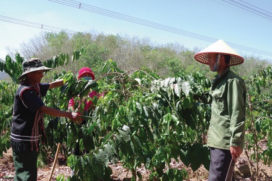 CCB, già làng Xiêng Lăng Bánh, làng Kà Nhảy, xã Đăk Nông, huyện Ngọc Hồi, chia sẻ kinh nghiệm chăm sóc cây cà phê với bà con dân làng.