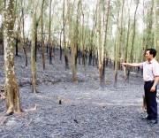 Nắng nóng kéo dài đã gây cháy rừng nhiều nơi trên địa bàn Nghệ An.