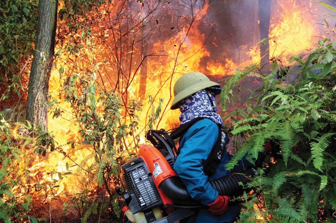 Nỗ lực dập cháy rừng ở huyện Nam Đàn (Nghệ An).