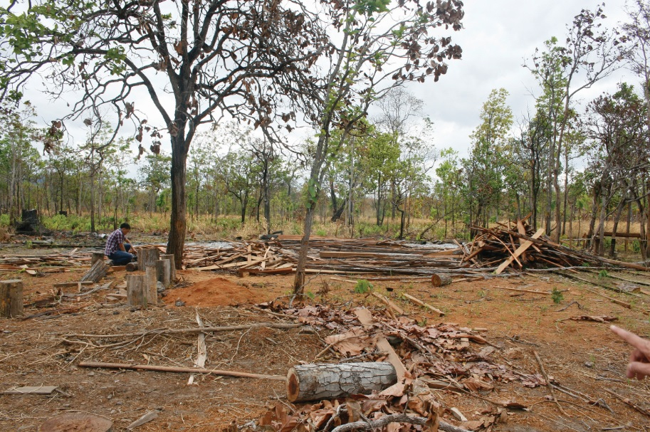Nhiều diện tích rừng tự nhiên đang bị đề nghị chuyển đổi ồ ạt.