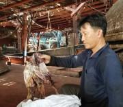 Gần 1.000 tấn mực khô ở Quảng Nam bị ế  do Trung Quốc từ chối nhập khẩu tiểu ngạch.
