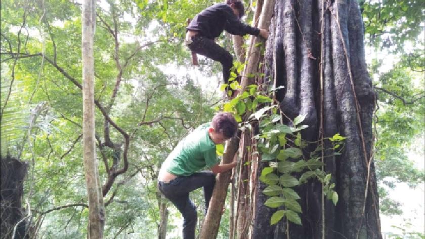Người dân miền núi, vùng sâu khi vào rừng tìm sản vật cần cẩn trọng với những loại quả, hạt không rõ tác dụng. Ảnh minh họa