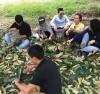 Giống sầu riêng Musang King xuất hiện tại các tỉnh Tây Nguyên với giá bán rất cao.