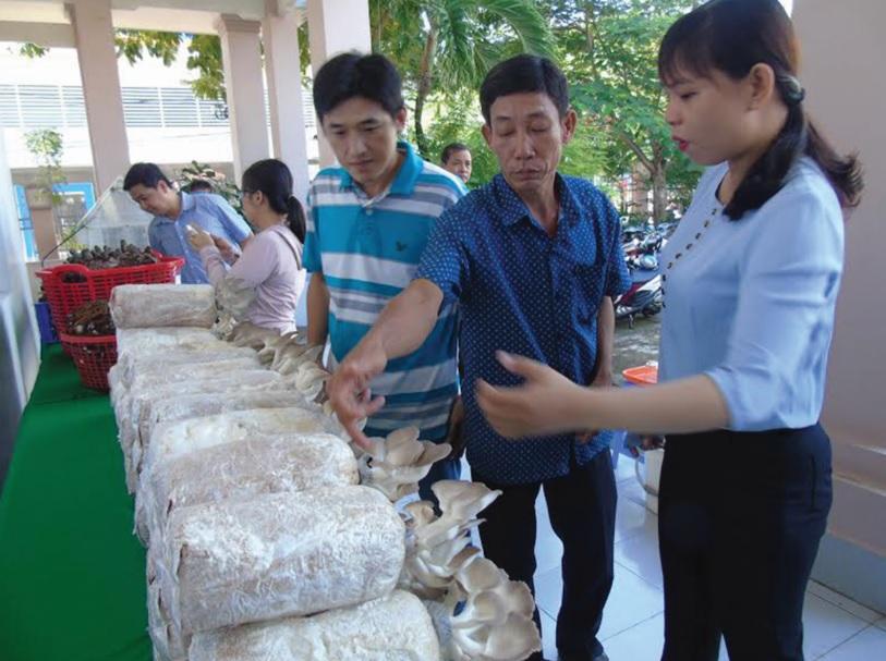 Sản phẩm nấm bào ngư của ông Phạm Văn Triều, xã Long Hưng, huyện Mỹ Tú, tỉnh Sóc Trăng được nhiều khách hàng đến thăm quan, chọn mua.