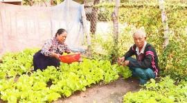 Già làng Rơ Com Pôk tích cực chăm lo sản xuất, phát triển kinh tế gia đình. Ảnh: N.N