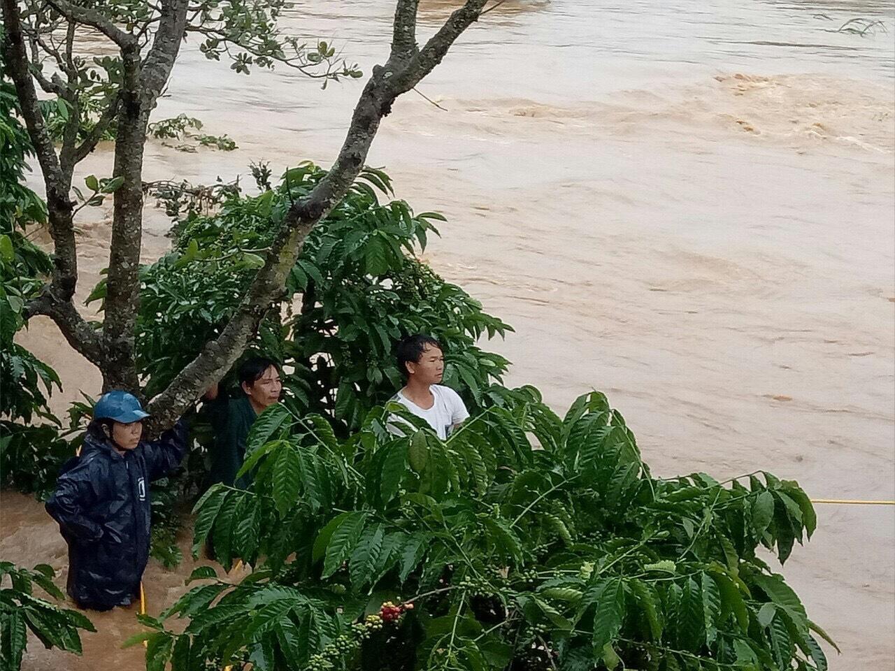 Nước lũ dâng cao đã nhấn chìm nhiều diện tích cây trồng, hoa màu của người dân huyện Bù Đăng, tỉnh Bình Phước