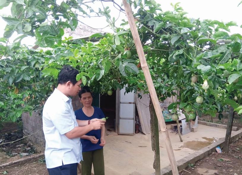 Cán bộ Chi Cục Trồng trọt và Bảo vệ thực vật tỉnh Sơn La kiểm tra vườn chanh leo của Hợp tác xã Chanh leo Mộc Châu.