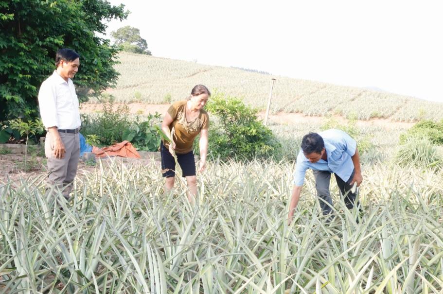 Người dân ở thôn Đồng Cống phát triển cây dứa mang lại giá trị kinh tế cao.