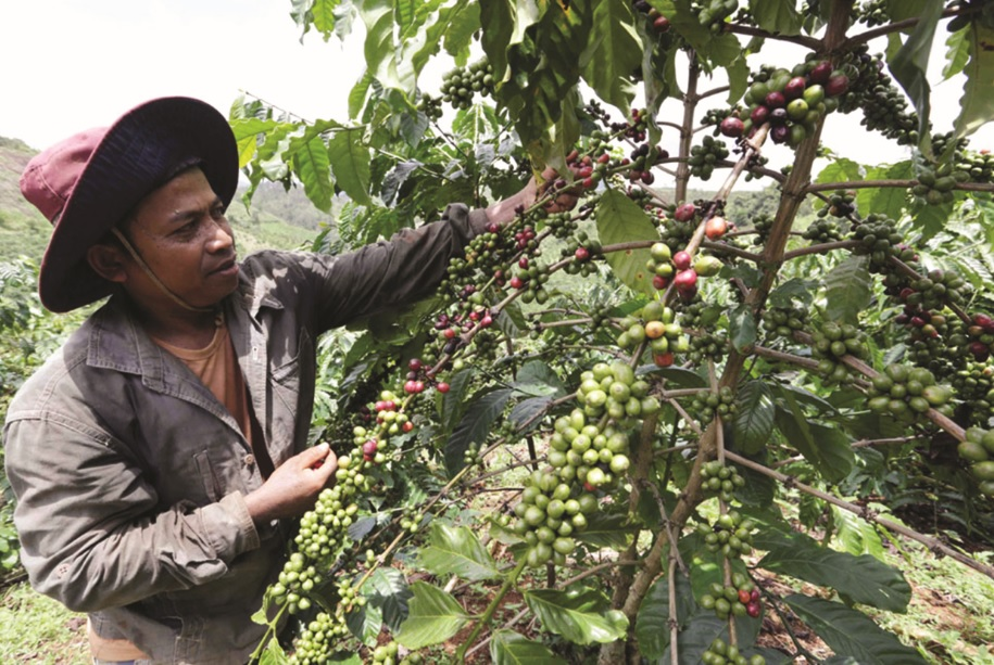 Nhờ vốn vay ưu đãi, gia đình anh K'San, dân tộc Ê-đê ở xã Đăk Som, huyện Đăk G'long đã đầu tư trồng cà phê và chăn nuôi.
