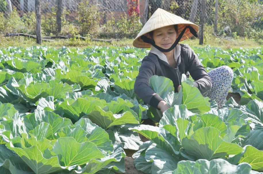 Nhiều phụ nữ được hỗ trợ vay vốn, con, cây giống để phát triển kinh tế.