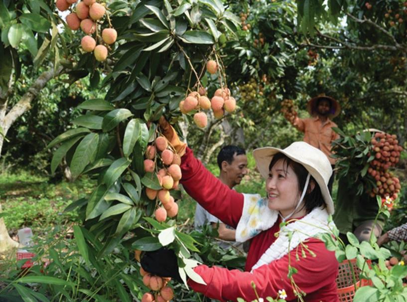 Đẩy mạnh ứng dụng KHCN vào phát triển cây trồng.