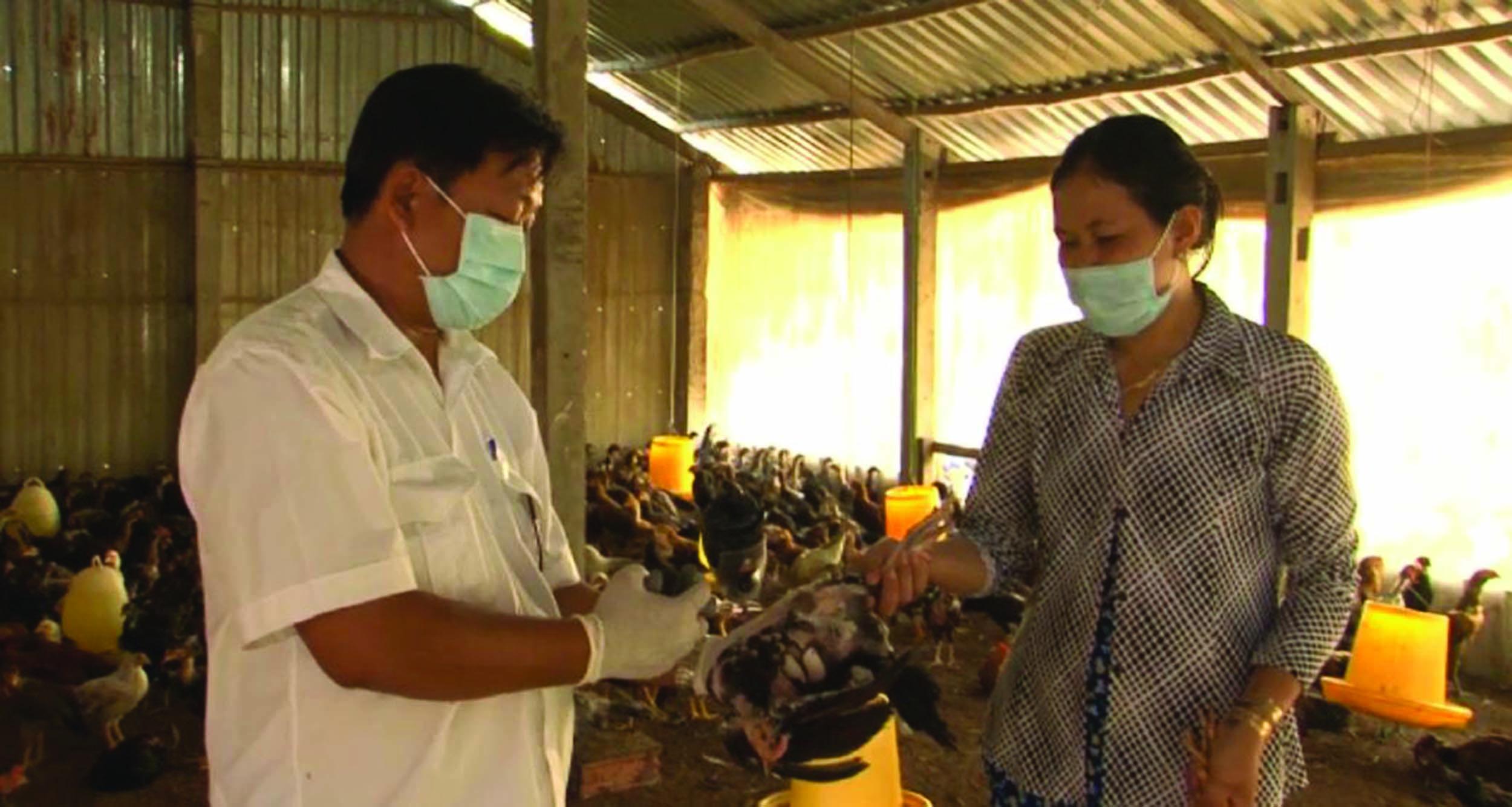 Phụ nữ xã Hòa Hiệp được hướng dẫn về tiêm phòng bệnh cho gà.
