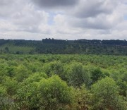 Trồng rừng