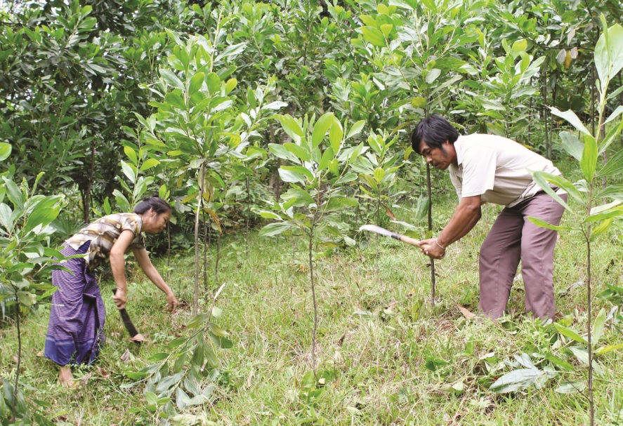 Người dân miền núi Quảng Ngãi chăm sóc rừng.