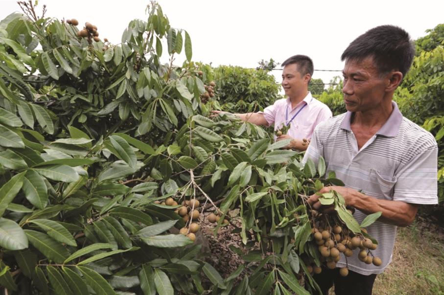 Nguồn vốn từ Ngân hàng Chính sách góp phần xây dựng nông thôn mới ở Hưng Yên.
