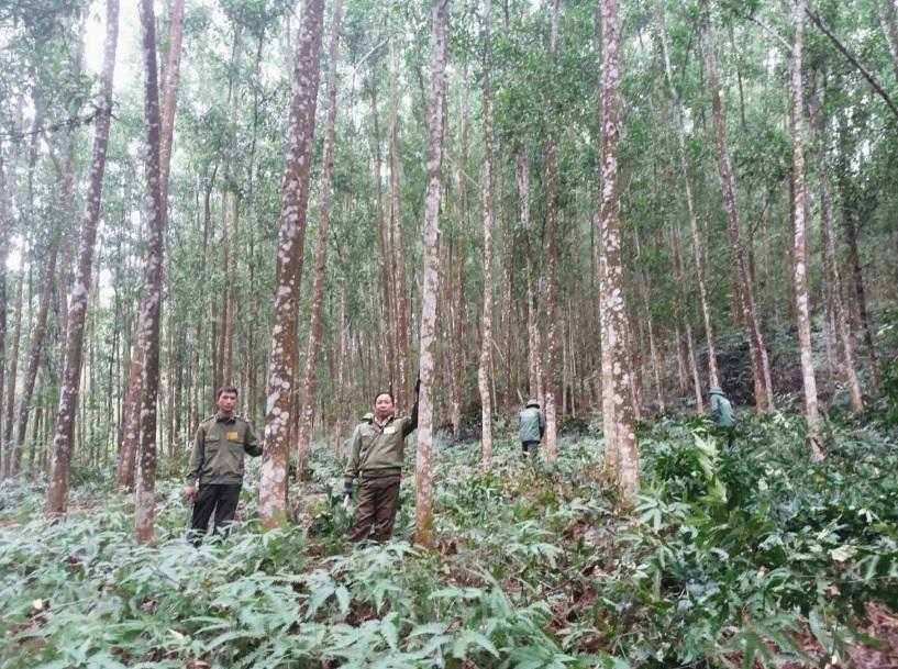 Nhờ chính sách giao khoán và DVMTR, nhiều cánh rừng ở Bình Định được bảo vệ tốt.